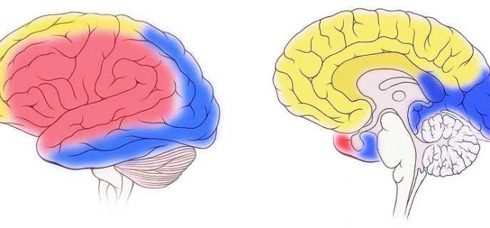 Как осуществляется кровоснабжение головного мозга
