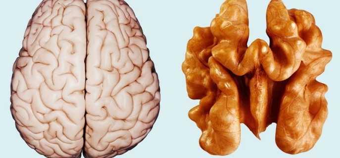 Способы синхронизировать полушария мозга