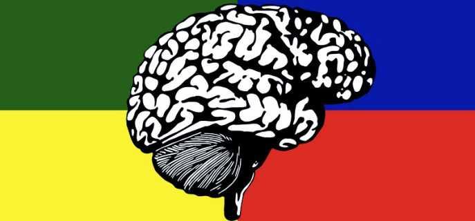 Системы мозга человека