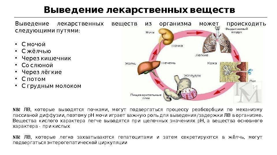 Пути выведения лекарственных веществ