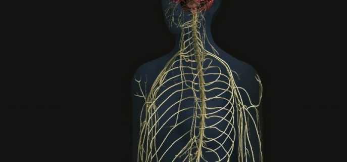 Симптомы, причины и методика лечения невралгии