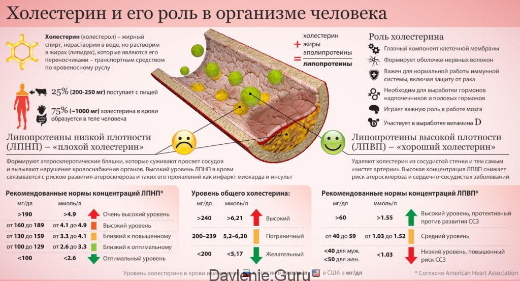 Роль холестерина