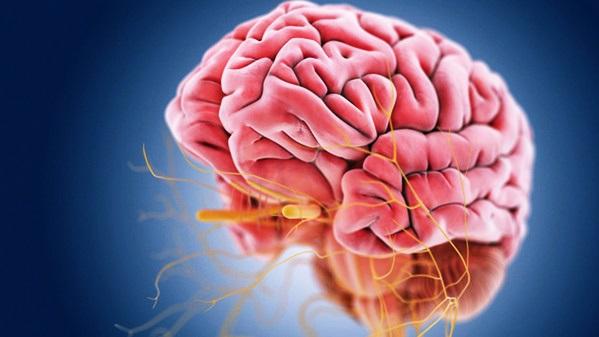 Нервы и мозг