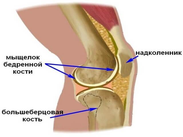 Строение коленной части ноги