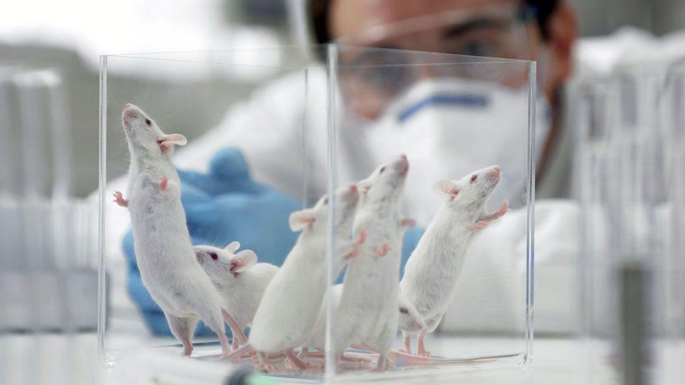 Исследования на мышах