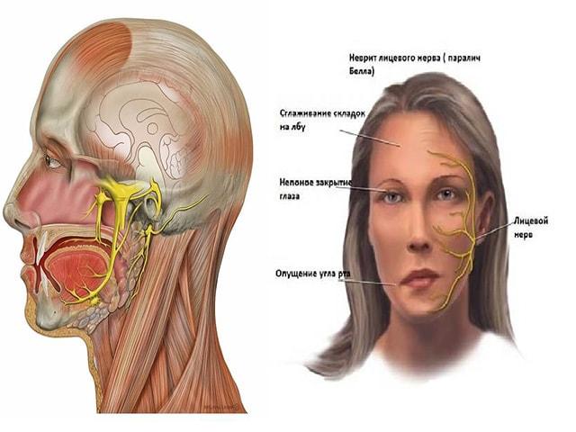 Нервы на лице картинки