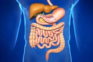 Здоровая пищеварительная система