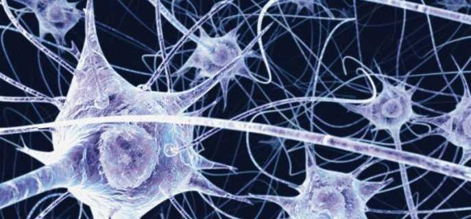 Строение и функции нейронов головного мозга