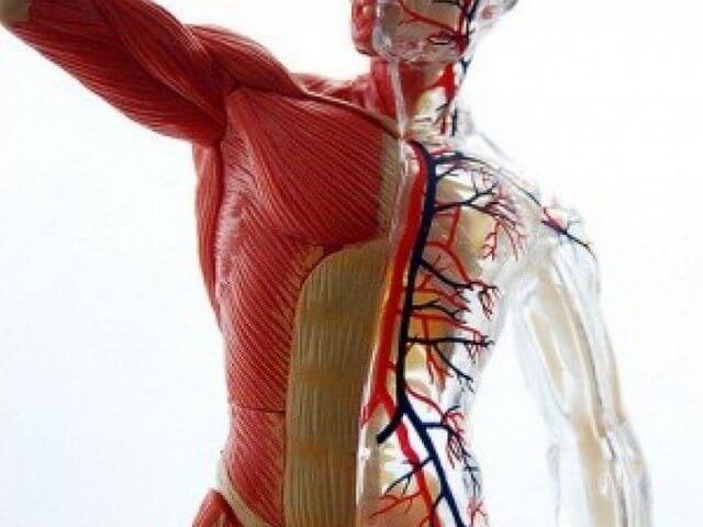 Высокий мышечный тонус