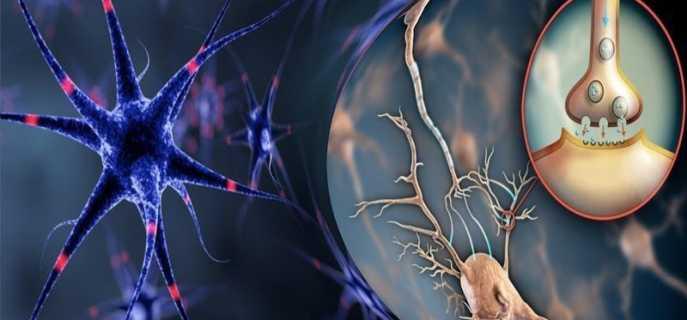 Как укрепить психику и нервную систему