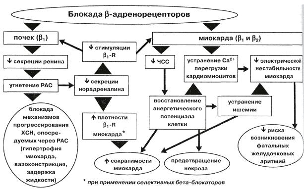 Бета блокаторы механизм действия