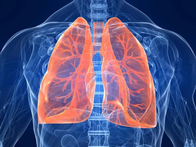 Орган дыхания