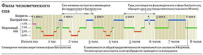 Фазы сна человека по времени (таблица)