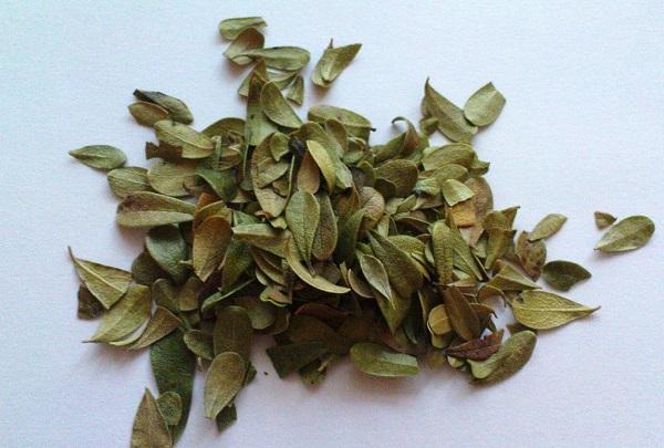 Листья толокнянки для приготовления сбора
