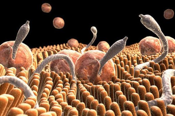 Возбудители описторхоза на клеточном уровне