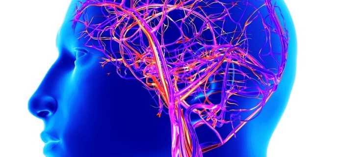 Патологии кровеносных сосудов головного мозга