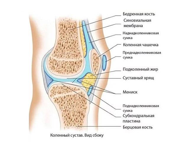Анатомическое устройство