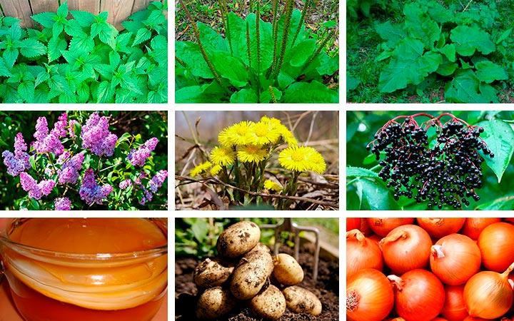 Лекарственные растения и продукты