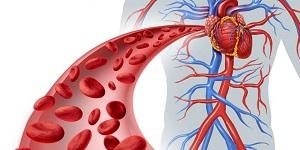 Здоровая кровь человека