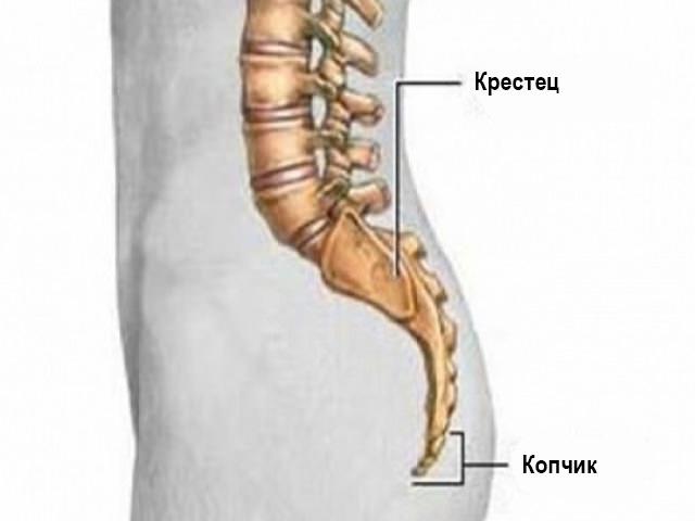 Нижняя часть спины