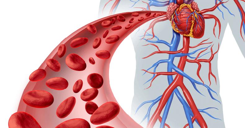 Улучшает кровообращение в области миокарда