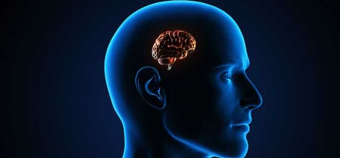 Самый маленький мозг у человека