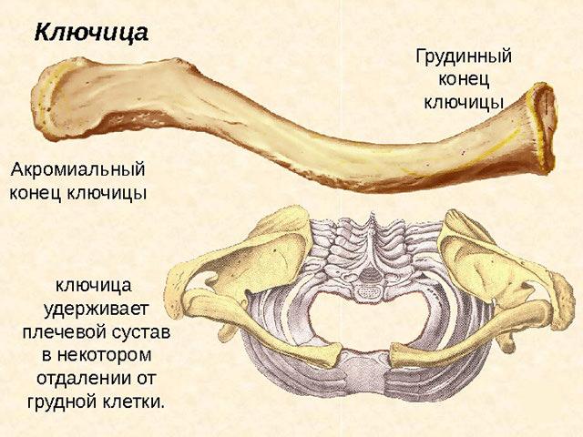 Схема устройства костей