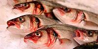 fish_0