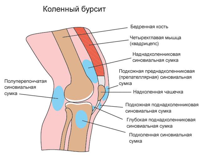 Гусиная лапка колена